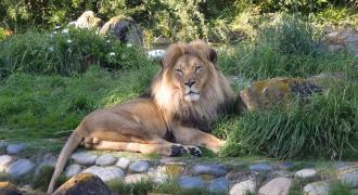 San Francisco Zoo