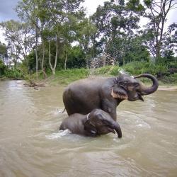 מחנה הפילים מאה סא