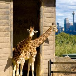 حديقة حيوان تارونغا