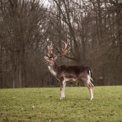 محمية دوسلدورف غرافنبرغ للحيوانات البرية