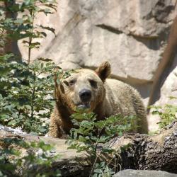 Jardim Zoológico Alpino de Innsbruck