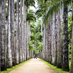 Vườn bách thảo Rio de Janeiro