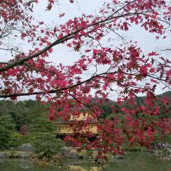 Templo Kinkaku-ji