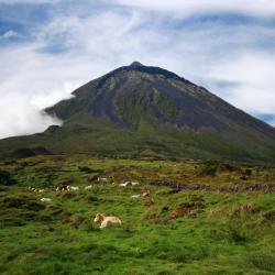 Ilha de Pico