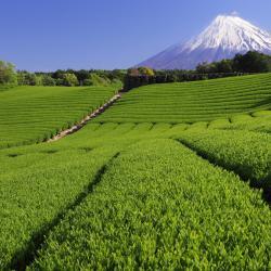 Shizuoka 63 casas de temporada