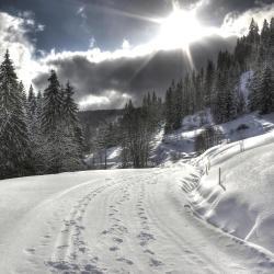 סקי פלדברג