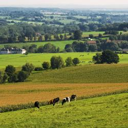Limburg 363 villas