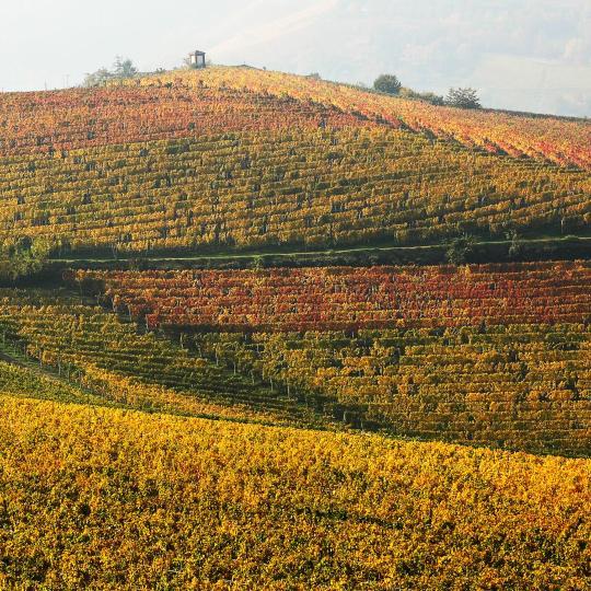 מסלולי יין באזורי לאנגהה ו-מונאפרה
