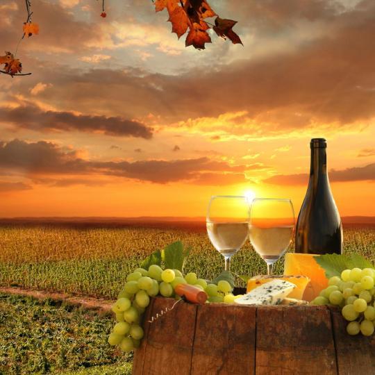 Ruta por los viñedos en Chianti