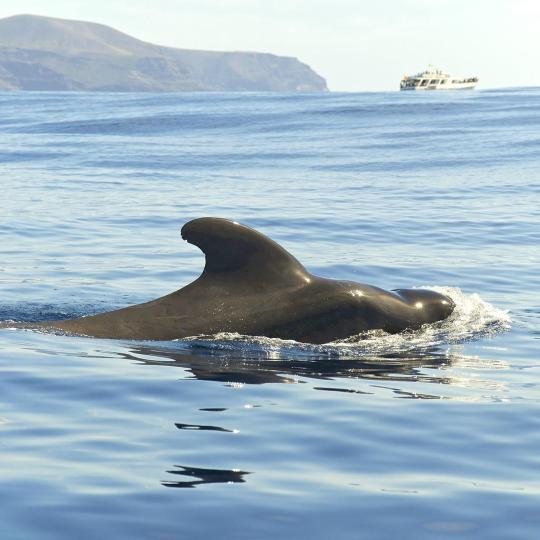 תצפית לוויתנים ודולפינים