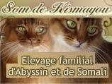 Chatterie Som de Kismayou - Elevage familial de Somalis et Abyssins.