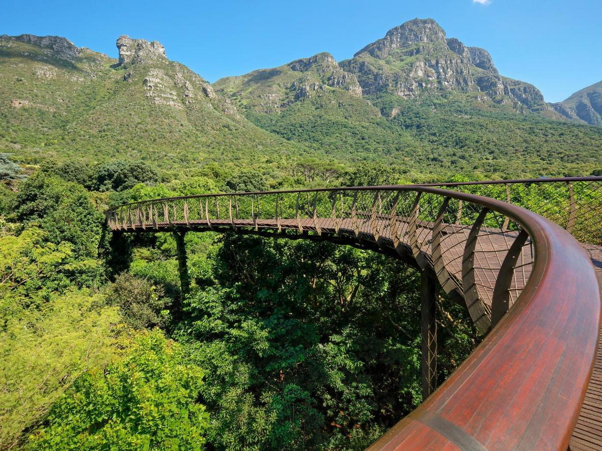 Mais de 7000 espécies de plantas nativas crescem no Kirstenbosch Garden