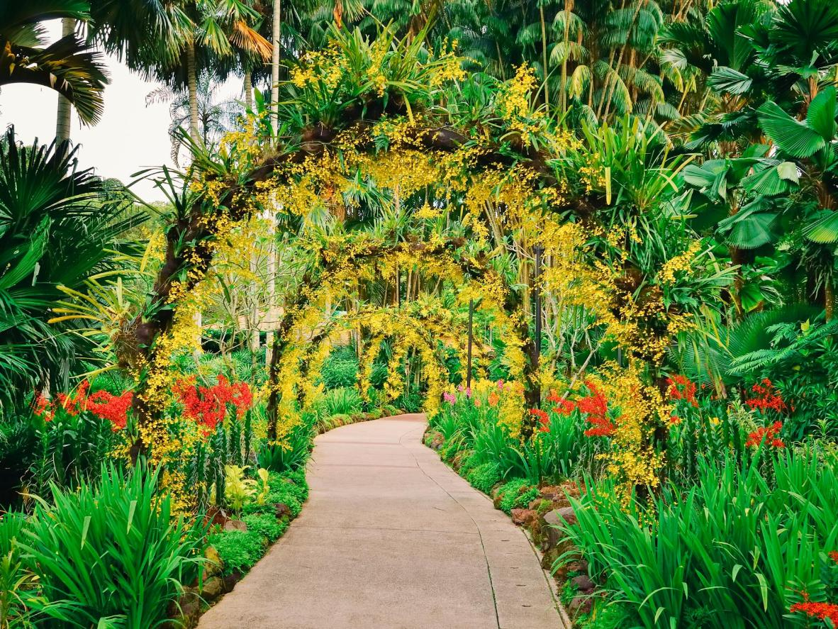 O Jardim Botânico de Singapura é uma profusão de cores