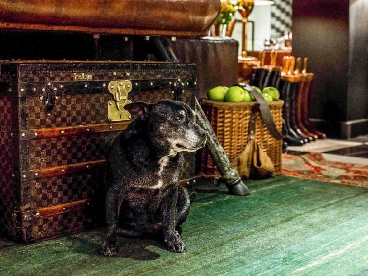 O Hotel Yard Milano atende aos animais de estimação sem abrir mão do estilo