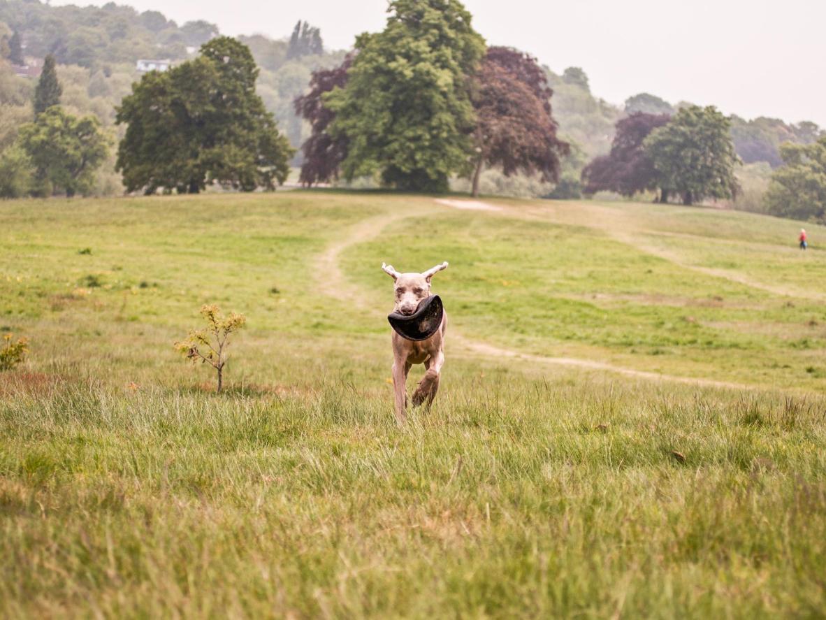 Hampstead Heath tem espaço de sobra para o seu cãozinho deitar e rolar
