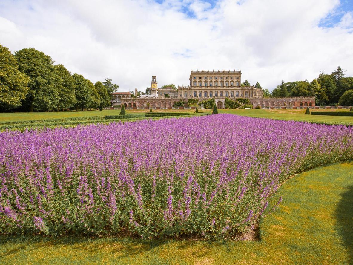 Os jardins de alfazema da Cliveden House são lindos para um passeio