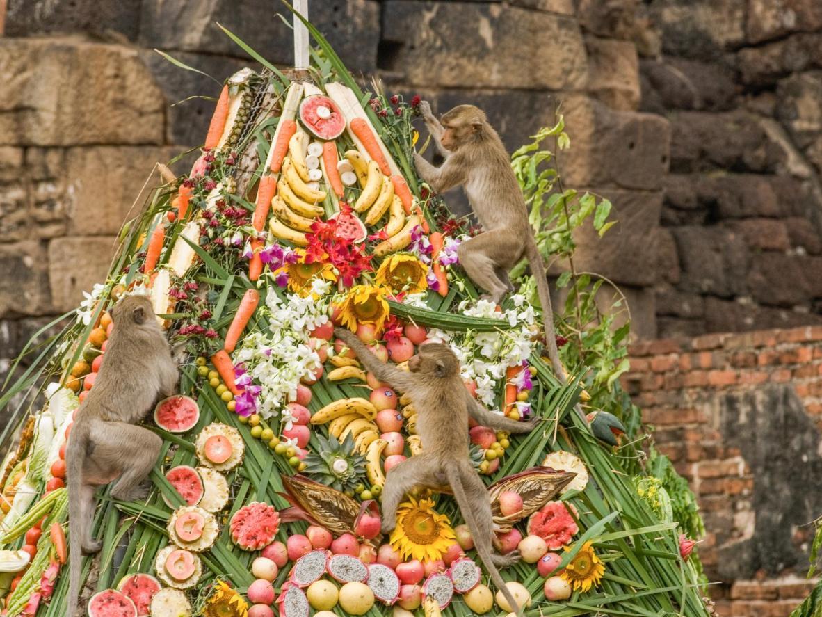 Chefes preparam pratos especialmente para os macacos