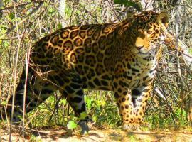 Pousada & Camping Santa Clara -Pantanal Sul, Boa Sorte