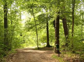Eekhoorn - Landgoed Zelle, Ruurlo
