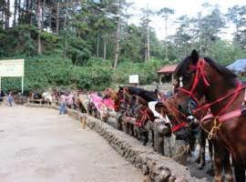 Europa Condominium 1509 Mines View, Baguio