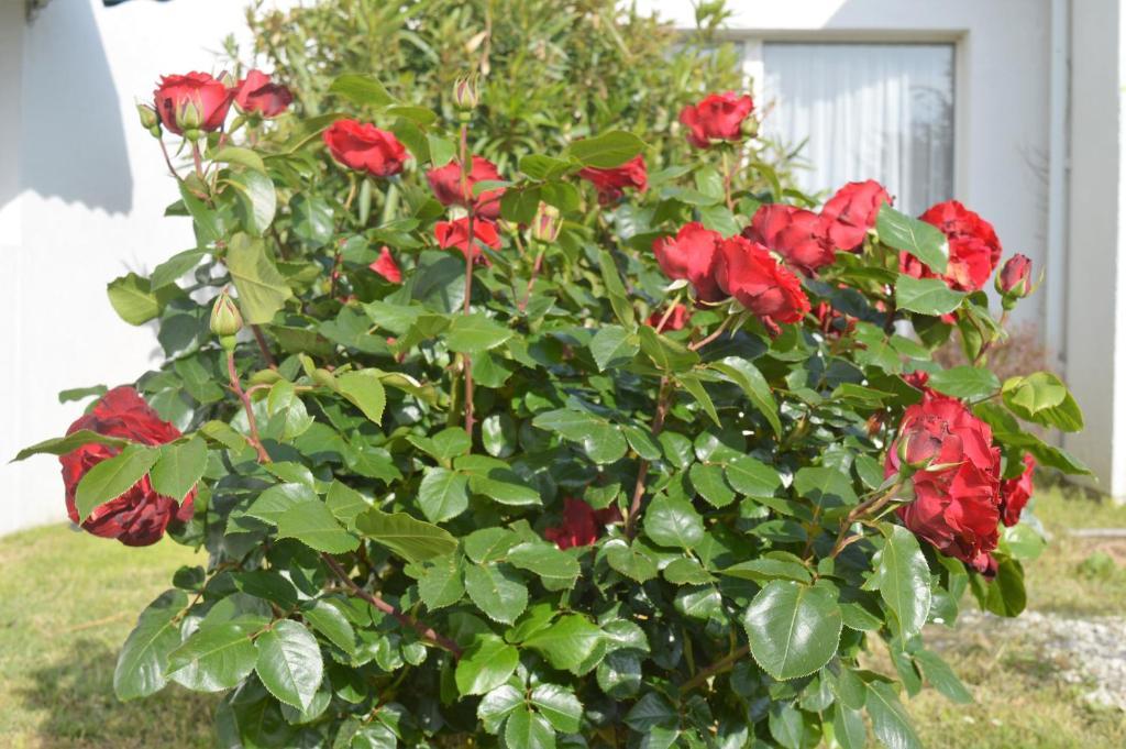 Les jardins d 39 ol ron saint pierre d 39 ol ron reserva tu for Entretien jardin oleron