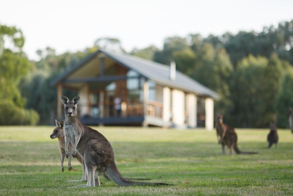בעלי חיים במלון דירות או בסביבה