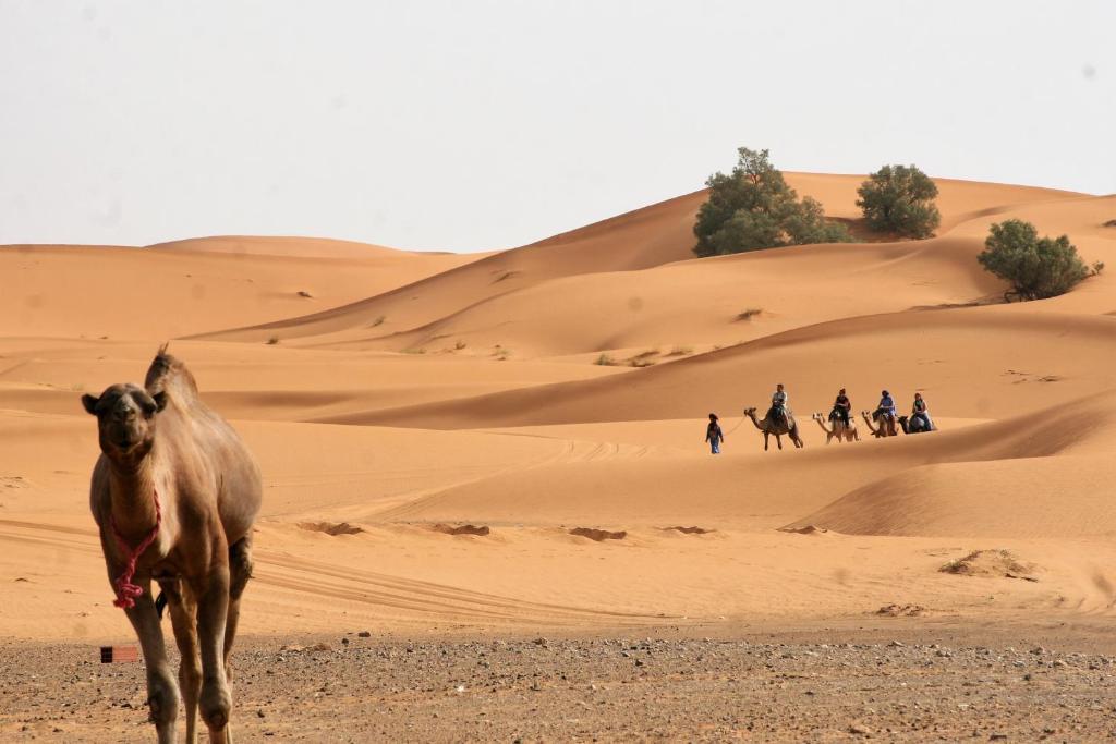 khamlia - morocco desert