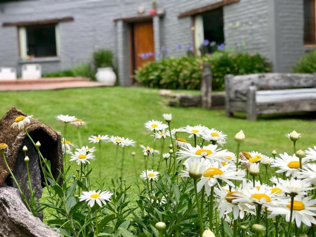 Un jardín fuera de ASM APART VII