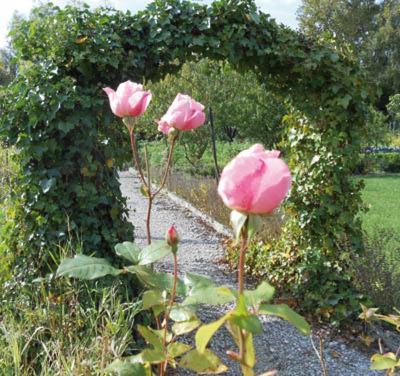 Les trois roses abbeville viamichelin informatie en for Au jardin des deux ponts abbeville