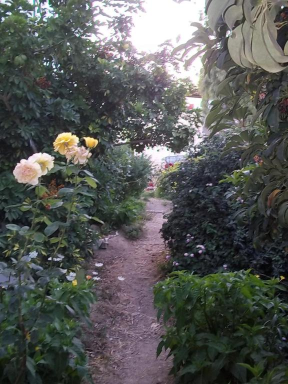 Katerina studios r servation gratuite sur viamichelin for Jardin katerina