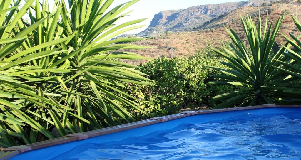 Casa de vacaciones Casita Naranja (España Álora) - Booking.com