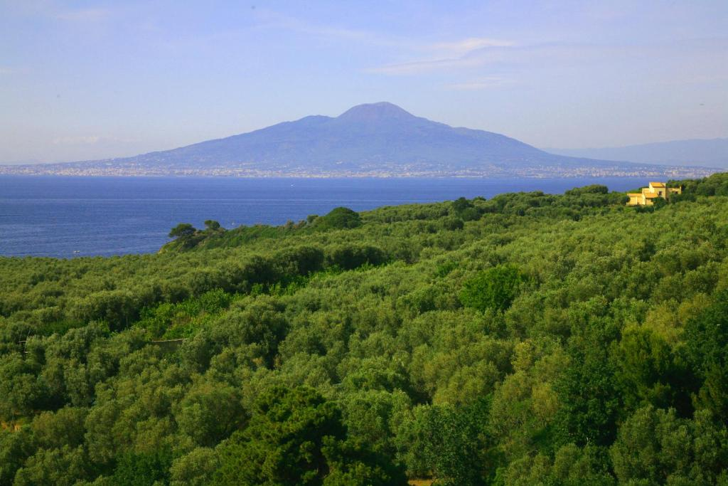 Residence villa rosmary sorrento book your hotel with viamichelin - Dive residence massa lubrense ...