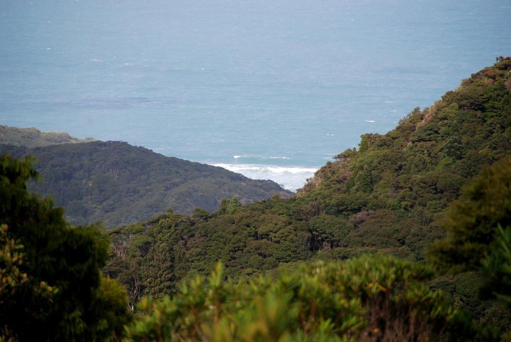 Отзывы Lone Kauri Lodge