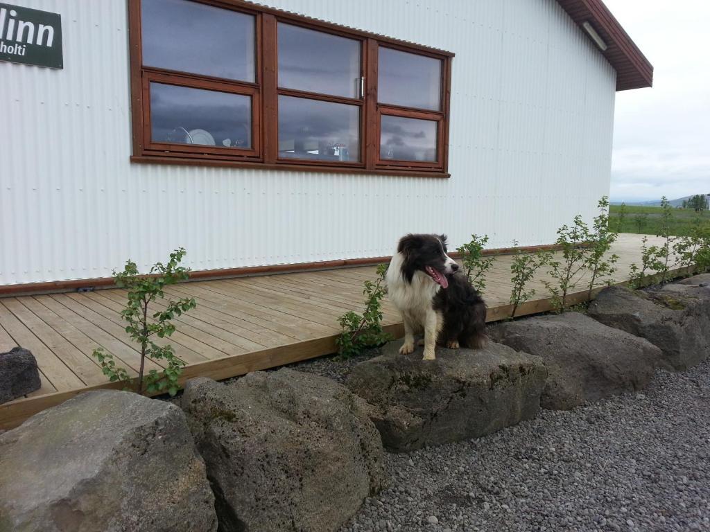 Skálinn Hostel Between Gullfoss and Geysir