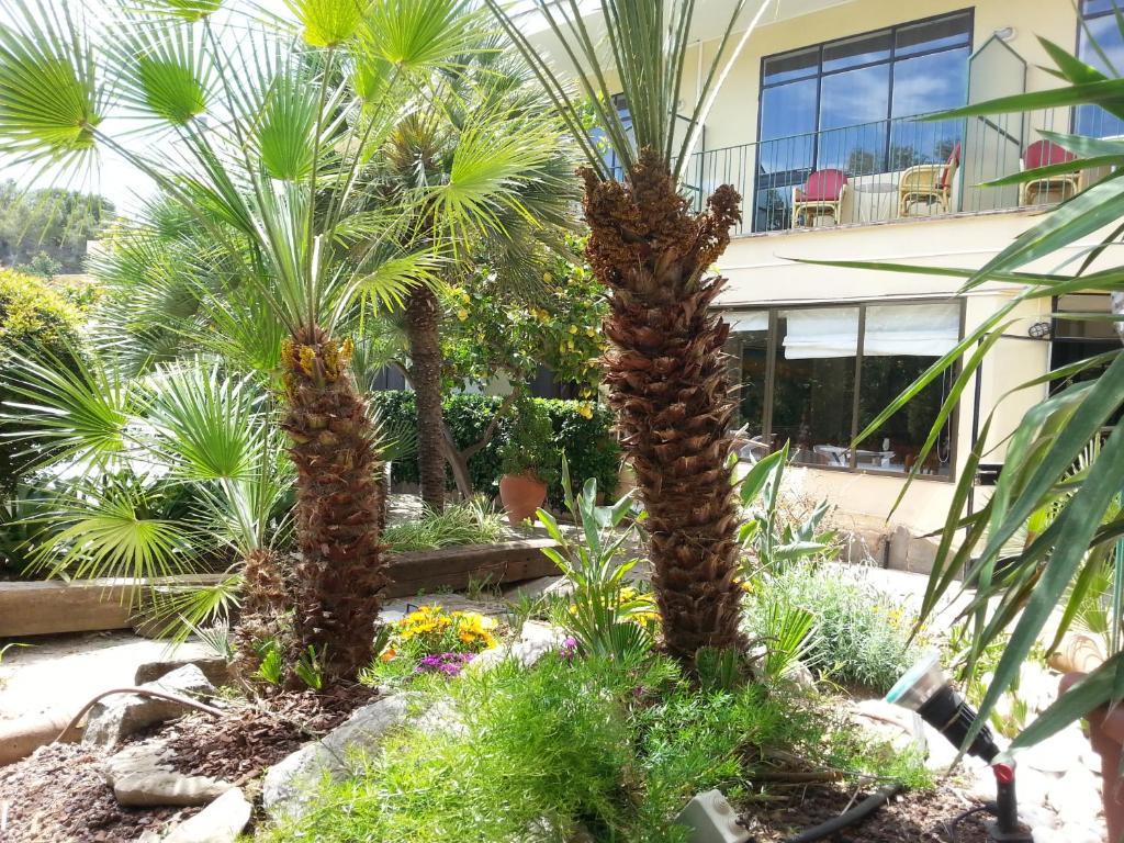 el celo garden andratx informationen und buchungen With katzennetz balkon mit morlans garden paguera homepage