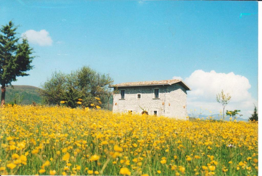 Casino tonti iarussi agnone book your hotel with for Casa italia forli