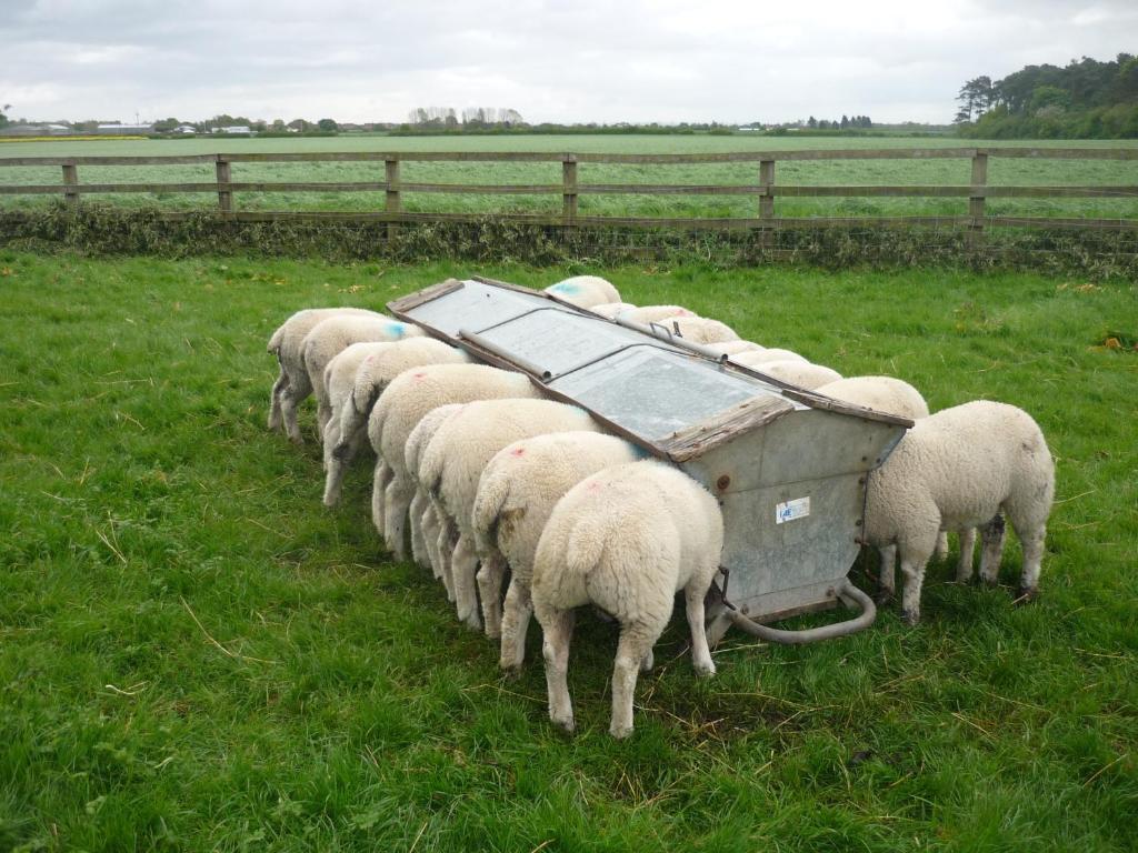 Beningbrough Home Farm Bed Breakfast