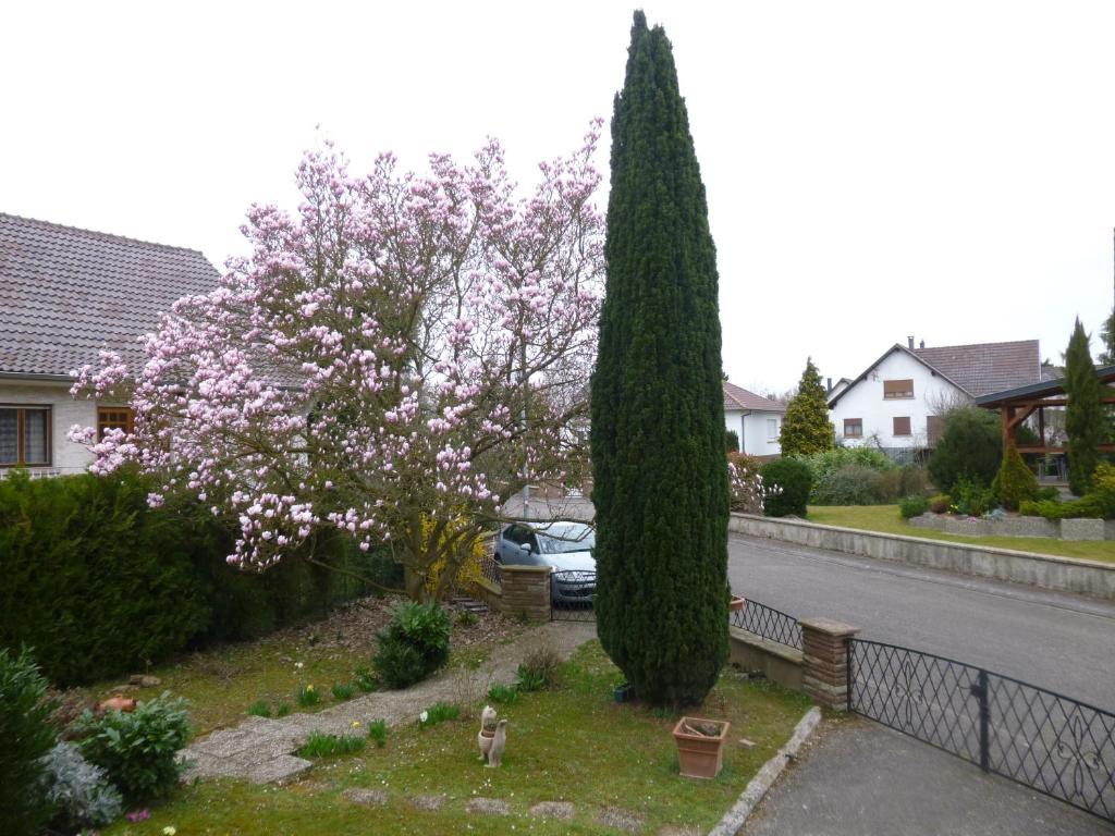 Jardin fleuri locations de vacances lingolsheim for Jardin fleuri