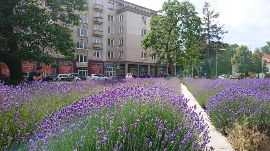 Apartment Letná 2
