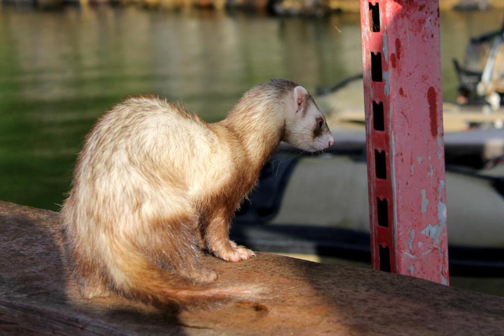 Отзывы Турбаза Святозеро — Важинская пристань