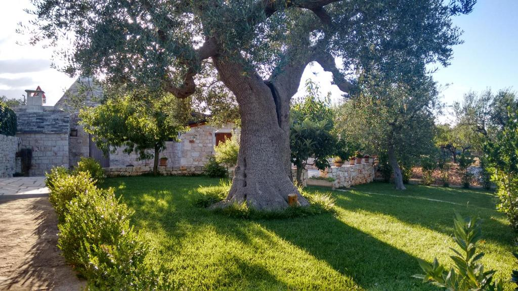 Bed breakfast il giardino degli ulivi - Giardino con ulivi ...