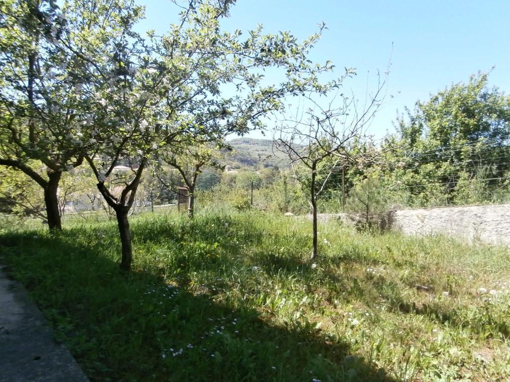 Jadis et jardin d 39 hesp rides g te bourdeaux dans la for Jardin hesperides