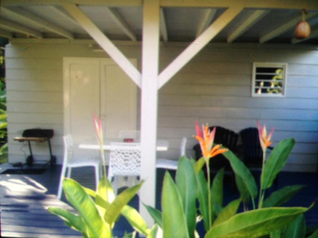 Un bungalow dans mon jardin fleuri baie mahault book for Herisson dans mon jardin