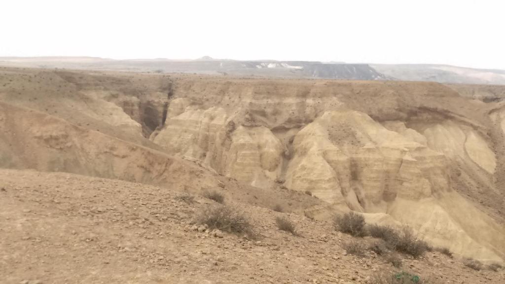 שושנת המדבר