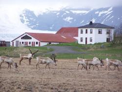 Guesthouse Holmur, Holmur, 781, Hólmur