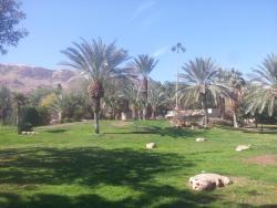 Kalia Kibbutz Hotel, Kibbutz Kalia, 90666, Kalia (israelsk bosetting)
