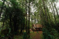 Huilo Huilo Cabañas del Bosque, Camino Internacional Panguipulli, km 60, 5663000, Huilo Huilo