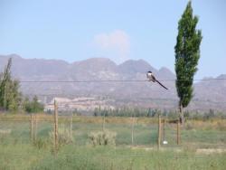 Cabañas Bonarda, Gobernandor Garcia 1300, 5600, San Rafael