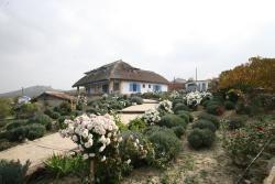 Safari Danube Delta, Enisala 95, 827191, Enisala