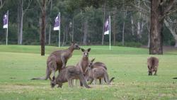 Riverside Oaks Golf Resort, 74 O'Briens Road, 2756, Cattai